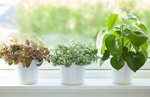 Bringing plants into your home can help with air quality